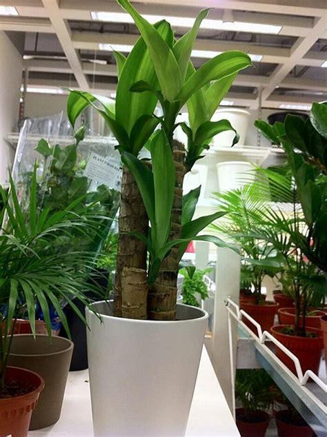 nieuw huis zuiveren nasa onthult 17 planten die de lucht in je huis zuiveren