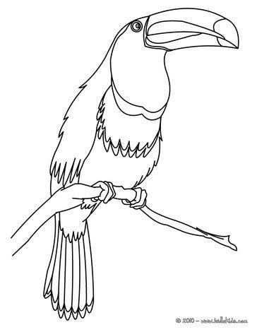 coloring page of a toucan bird toco toucan coloring pages hellokids com