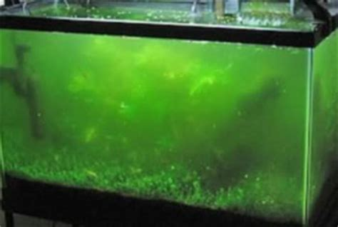 Low Light Tropical Plants - controlling algae growth in a tropical fish tank tropical fish site