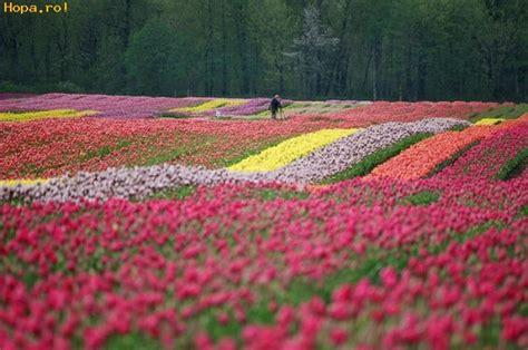 co d fiori lan cu flori poze haioase flori hopa ro