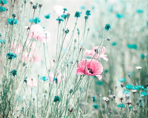 pink aqua flower photography teal blue nursery photo pale