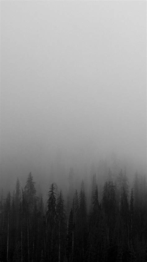 black  white mist forests wallpaper iphone wallpapers