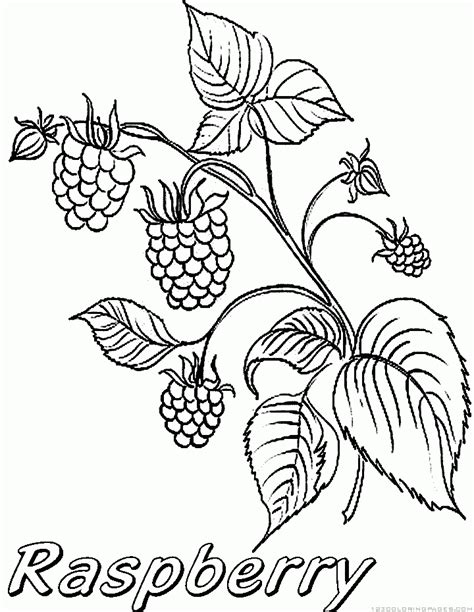 free coloring pages of raspberry shortcake