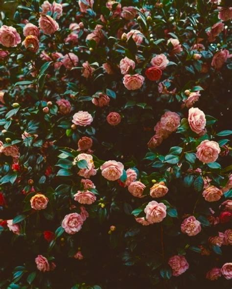 imagenes hipster de rosas tumblr foto grunge tumblr
