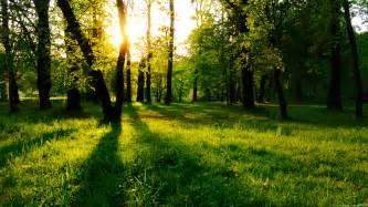 Sun between trees wallpaper 610704