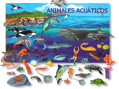100 ejemplos de animales terrestres y acuticos mundo animal animales acuaticos