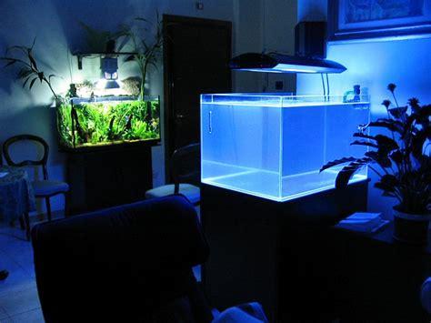 vasche per acquari marini allestimento di acquario marino tropicale cosa serve