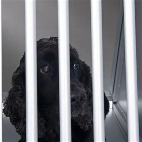 gabbia x cani gabbia per cani aluline zooplus