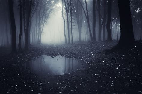 Wall Murals Forest best wallscapes lake in a dark forest with fog