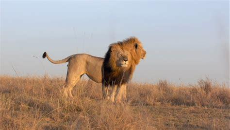imagenes animales de africa im 225 genes de animales salvajes de 193 frica