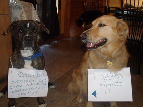 dog shaming friends  rowlett animals