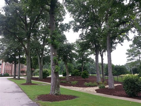 Garden Center Zebulon These Are The 5 Best Places Near Raleigh To Retire Movoto
