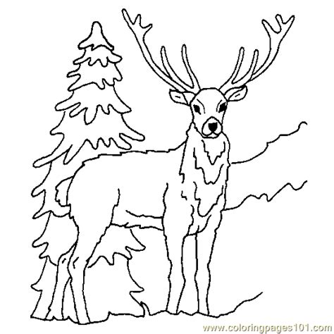 deer fighting coloring pages free coloring pages of g deer