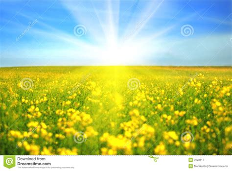 royalty free up pictures images and stock photos istock day royalty free stock photography image 7923617