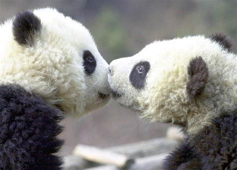 Sweet Amp Cute Animals Kissing Funny And Cute Animals