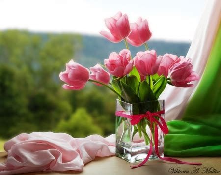 wallpaper flower gift beautiful gift flowers nature background wallpapers on