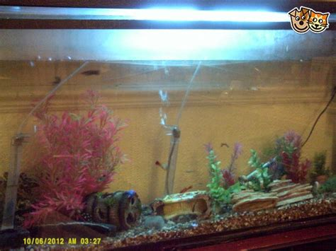 fish tank cover with light fish tank cover with light 10 gallon fish tank cover