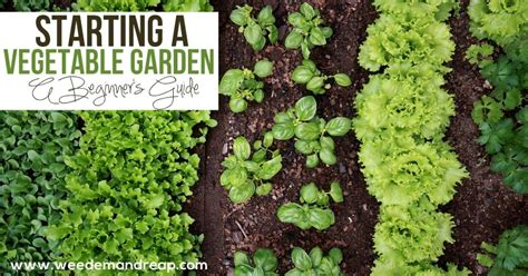 How To Start A Backyard Vegetable Garden by Starting A Vegetable Garden Em Reap
