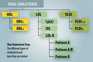 Vap Cholesterol Testing Life Extension