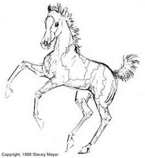 coloring pages of appaloosa horses appaloosa coloring coloring pages