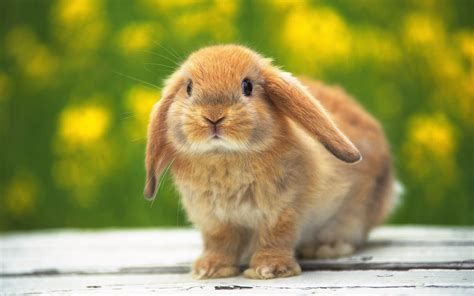cute rabbit hd wallpaper all wallpapers cute rabbit hd wallpapers 2013