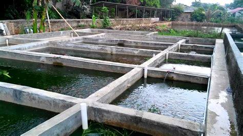 membuat hidroponik dan kolam ikan cara membuat kolam sirkulasi budidaya ikan youtube