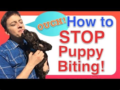 how to to stop biting how to get puppy to stop biting and puppy