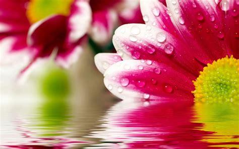 fiore in sfondo quot fiore in acqua quot 1440 x 900 natura fiori