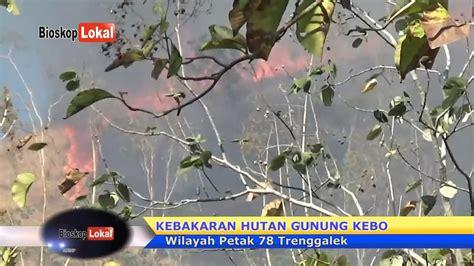 kebakaran hutan gunung kebo trenggalek jatim youtube