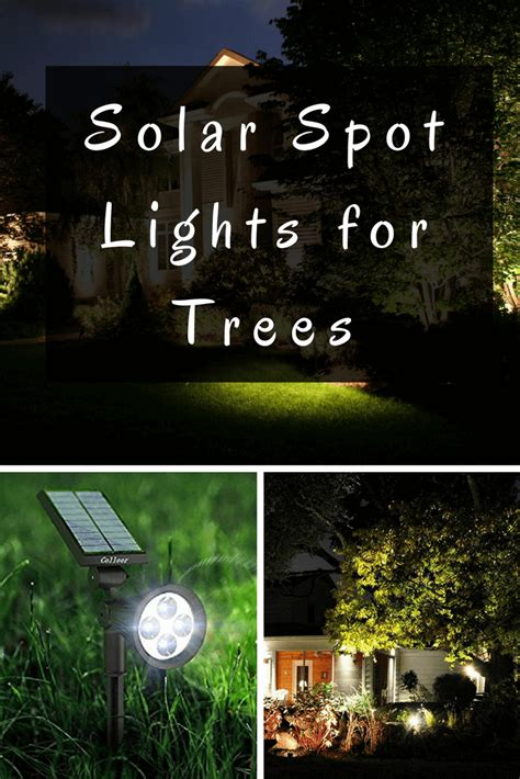 solar spot lights for trees accent your garden features at with solar spot