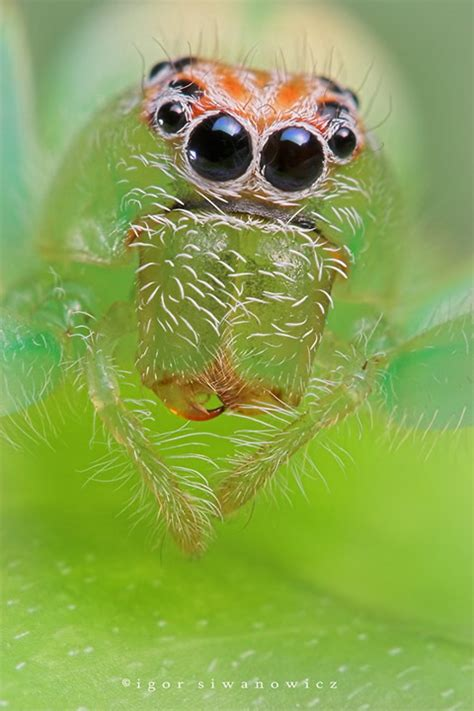 imagenes animales raros reales animales extra 241 os reales falsos graciosos exoticos