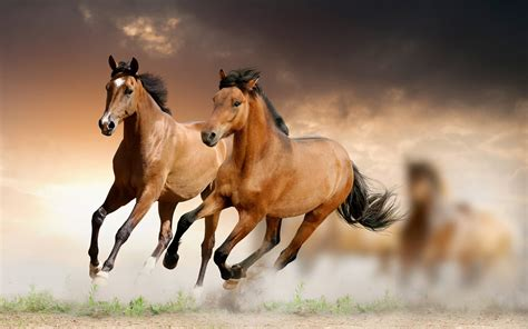 horses wallpapers wallpaper cave