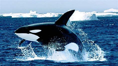 la ballena image gallery la ballena