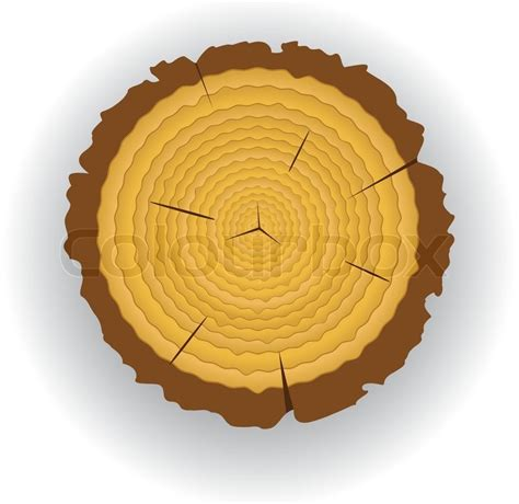 Wooden Photo Clip T0210 2 vector wooden cut clip of a pine stock vector colourbox