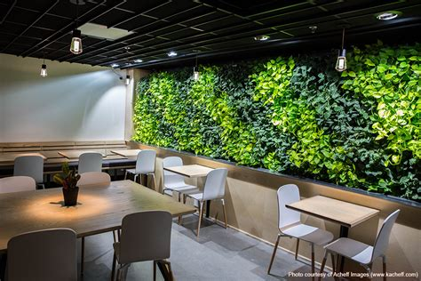 livewall indoor living wall livens  coava coffees