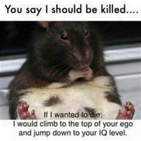 People Suck Memes - hamster meme funny memes pinterest meme and animal
