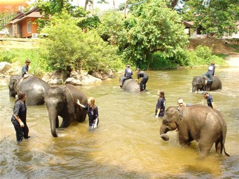 thai elephant home mae taeng thailand address phone