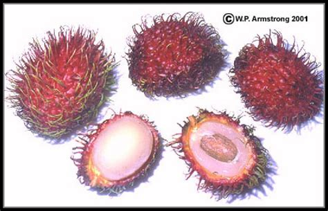 lychee fruit inside far out asian fruit