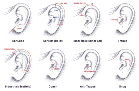 ear types best of earring for cartilage beautify themselves with earrings