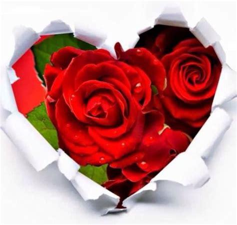 imagenes d rosas y corazones imagenes de rosas rojas dentro de un corazon imagenes y