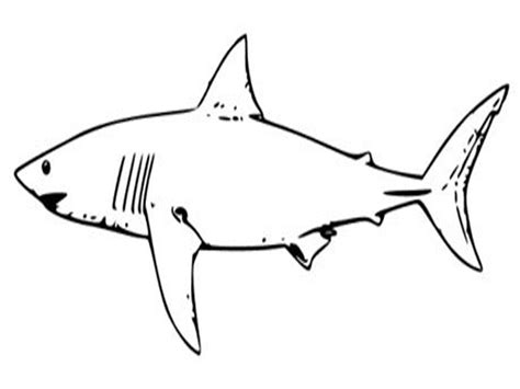 Coloring Pages Sharks Printable free printable shark coloring pages for
