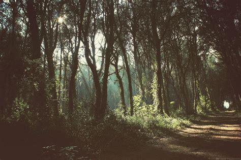 imagenes extrañas en el bosque bosque
