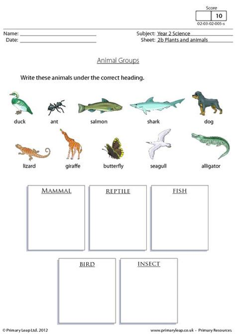 printable animal groups animal groups 1 primaryleap co uk