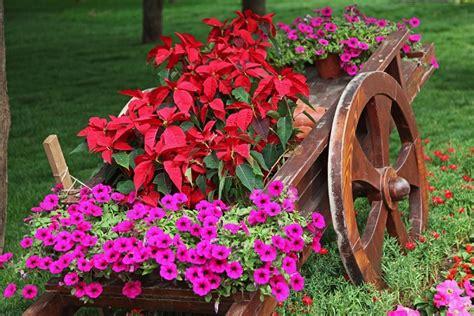 foto dei fiori sanremo in fiore con i carri fioriti l 8 marzo pollicegreen