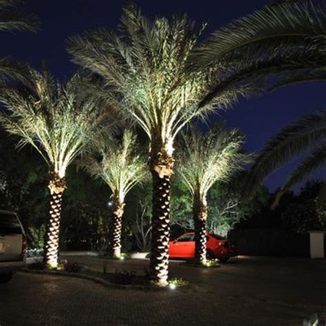 Landscape Lighting Palm Trees Palm Tree Uplighting Home Landscape