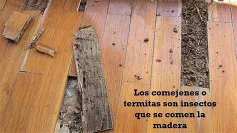 eliminar carcoma muebles como eliminar carcoma de muebles interesting carcoma y