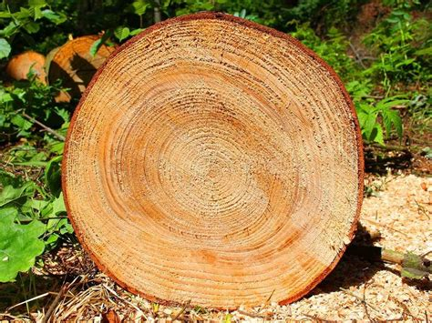 tree cross section we ll get a very nice cross section of the economy this