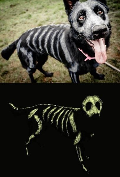 homemade dog costumes  diy costumes   dog