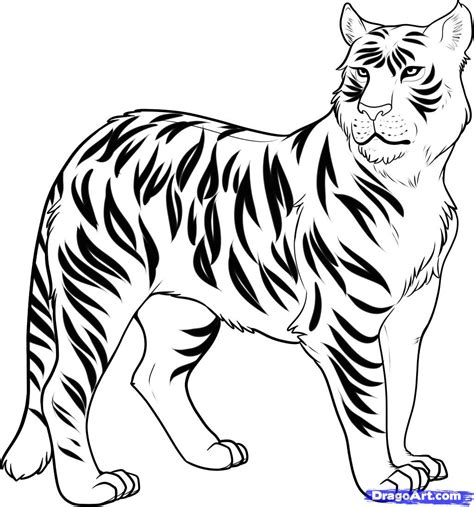 how to draw a liger liger step by step forest animals