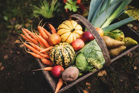 The Vegetable Garden Starter Kit Gear Patrol Starter Vegetable Gardens